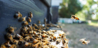 纯天然农家自产特级蜂蜜槐花蜜荆条蜜